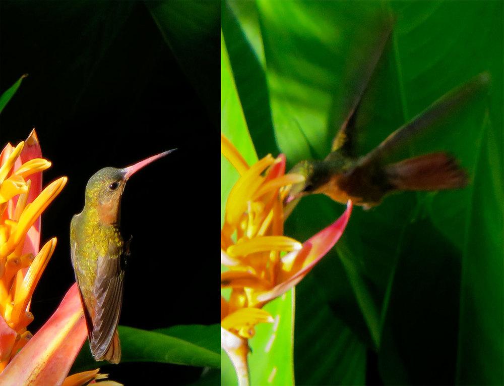 189-hummingbird.jpg
