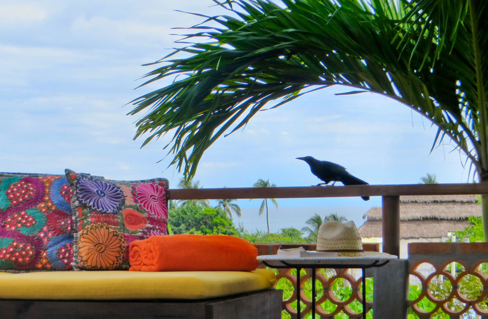 023-bird-on-pool-lounge-deck.jpg