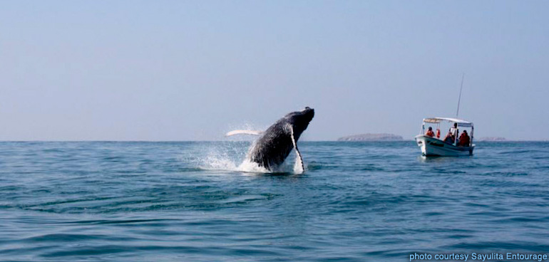 sayulita_entourage-whale_watching-146.jpg