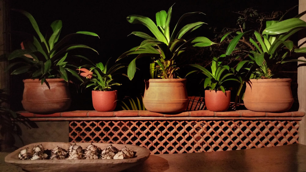 206-plants.jpg