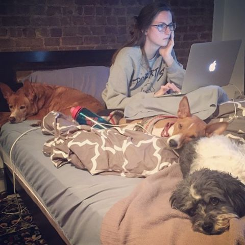 #CODE GAME DON'T STOP. Working like a dog tryna get this site mobile optimized. Well...not like these dogs, but like, dogs who move and actually do things. 💻🐶 #dogswhocode #girlswhocode #webdesign #websitedesigner #websites #marketing #coding #websitedesign #websites #webbuilder #websitemaker #websitebuilder #html #css #javascript