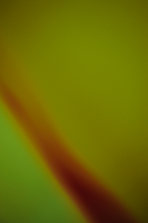 Doug_Ness__DSC0396-15084.jpg