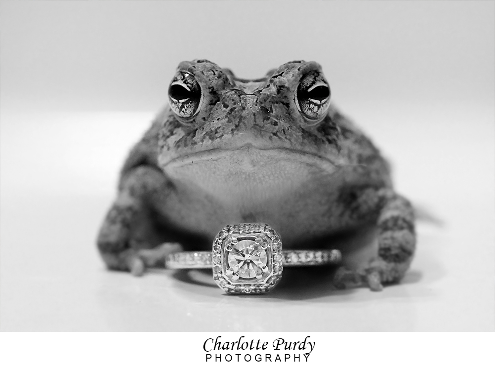 Charlotte Purdy Photography