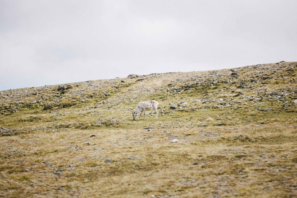 Norway2015DylanRoberts-17.jpg