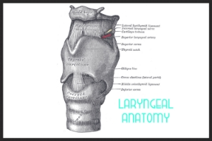 REFERENCE: Review  the basics of laryngeal anatomy via drawings and laryngoscopy images by Dr. Rich Levitan @ airwaycam.com.