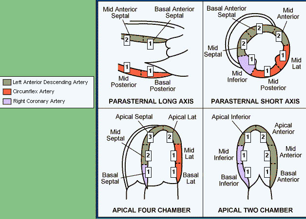 Coronary Artery Territories