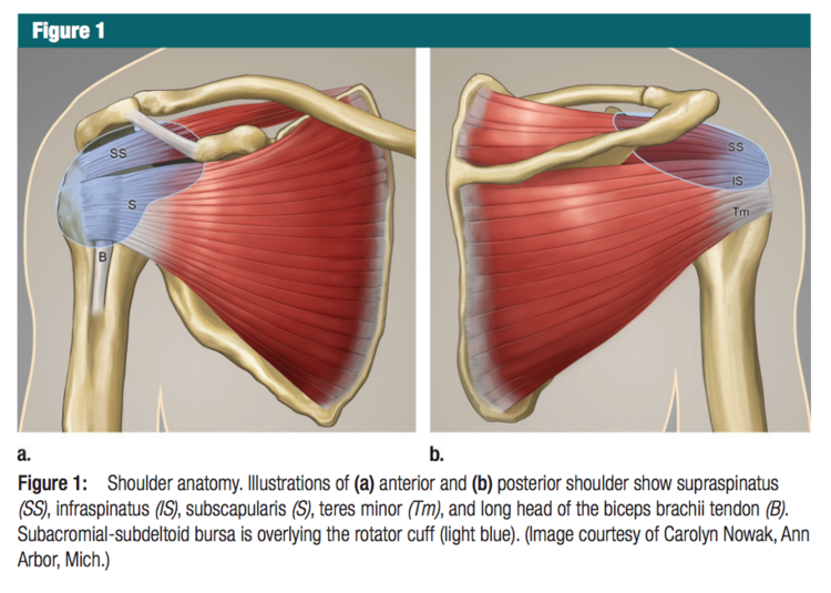 Ultrasound Leadership Academy: Intro to Shoulder Evaluation — EM Curious