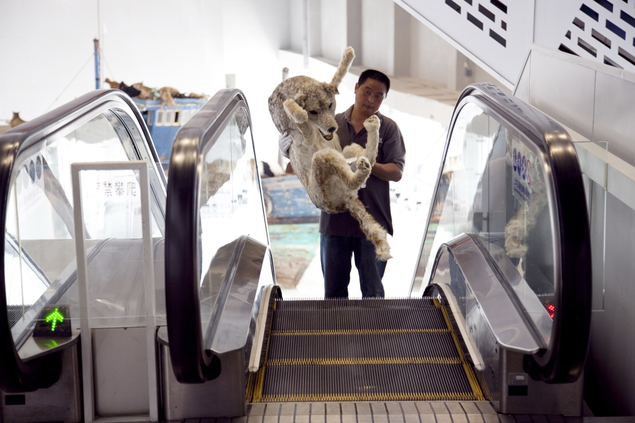 Riding up the escalator with a wolf