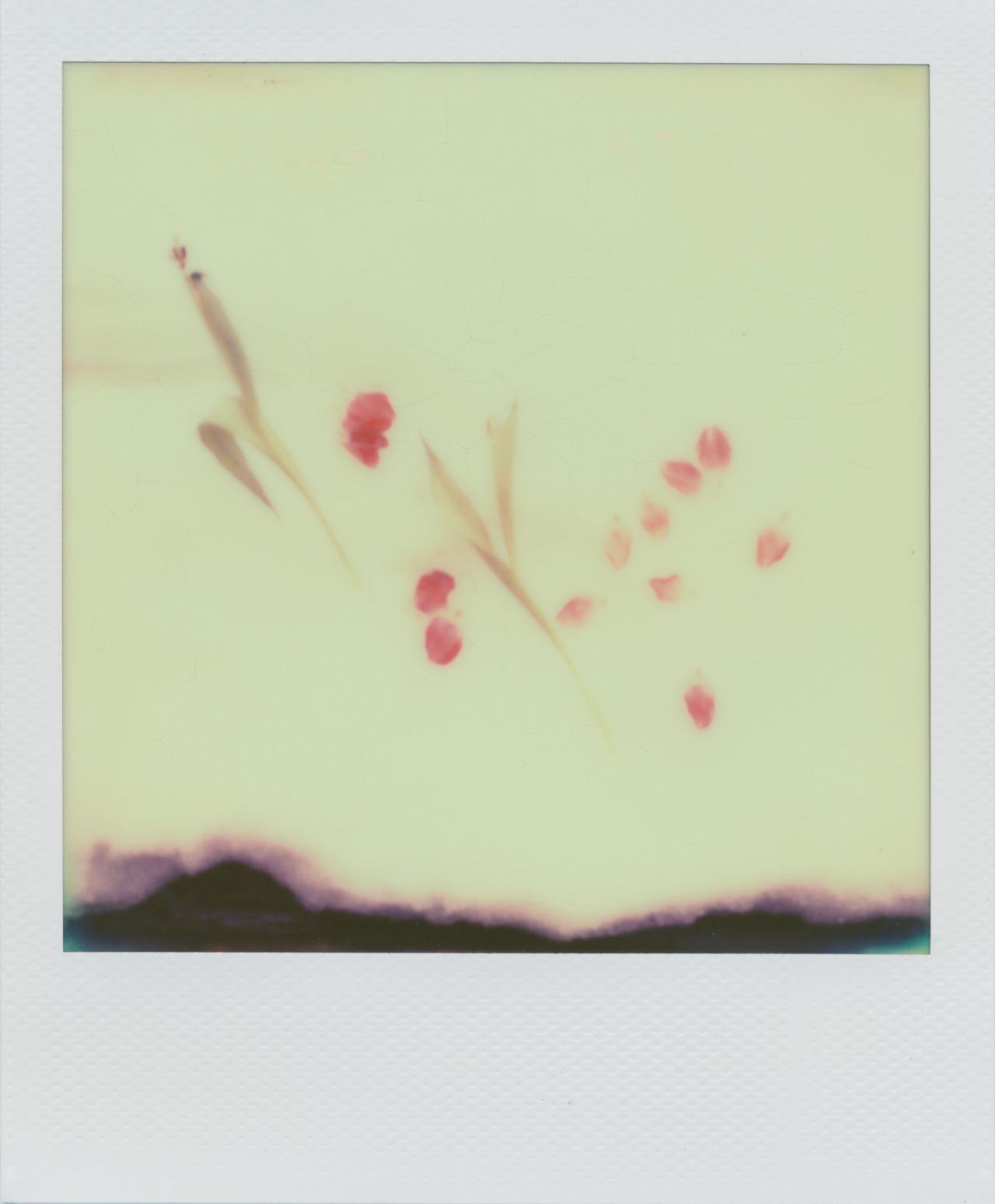 Tulip Pedals