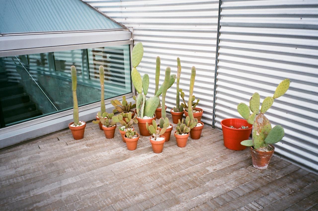 Cacti in the Winter