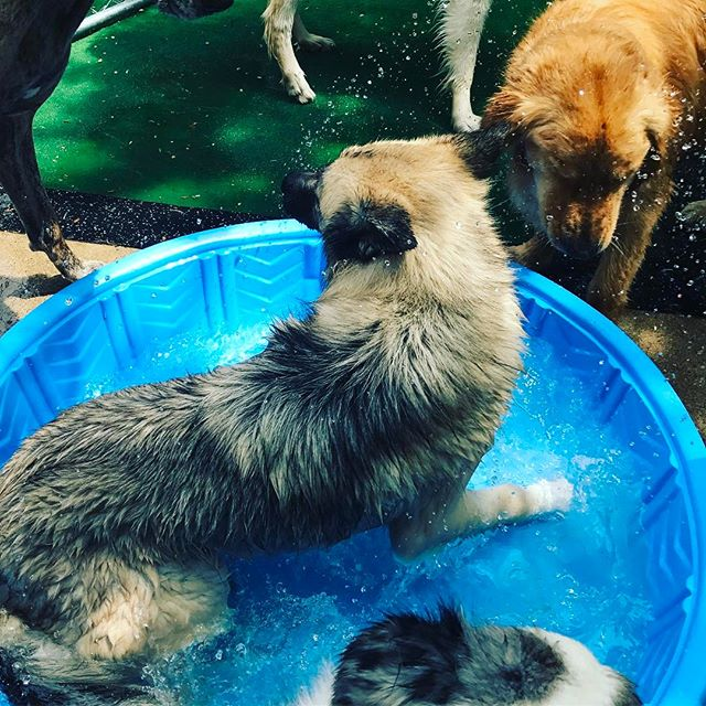 Wet Wednesday! #dogs #doglife #dogoftheday #dogsofinstgram #wetdogs #doggydaycare