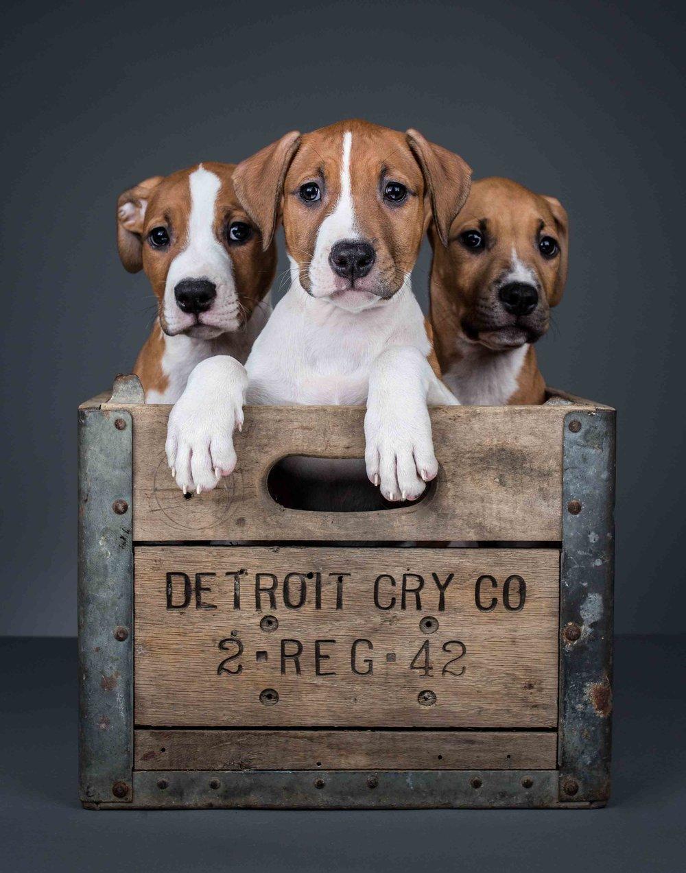website pups (1 of 1).jpg