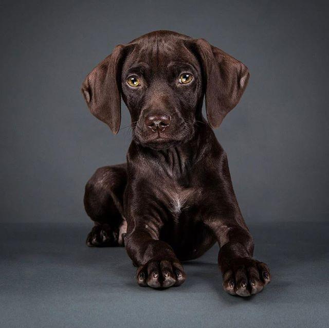 Little Chip! #dogsofinstaworld #dogsofinstagram #dogphotography #dogportrait #puppiesofinstagram #puppy #puppylove #doggydaycare #porthuron