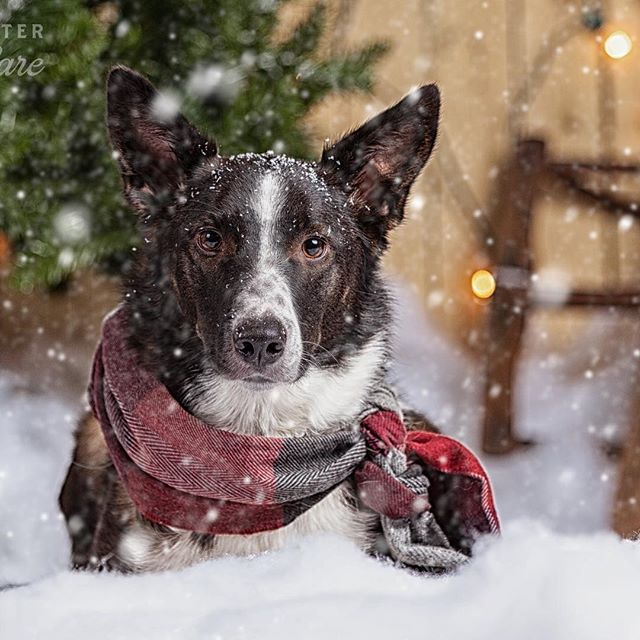 It's starting to look a lot like Christmas! #dogsofinstagram #doggydaycare #dog #dogphotography #dogphotographer