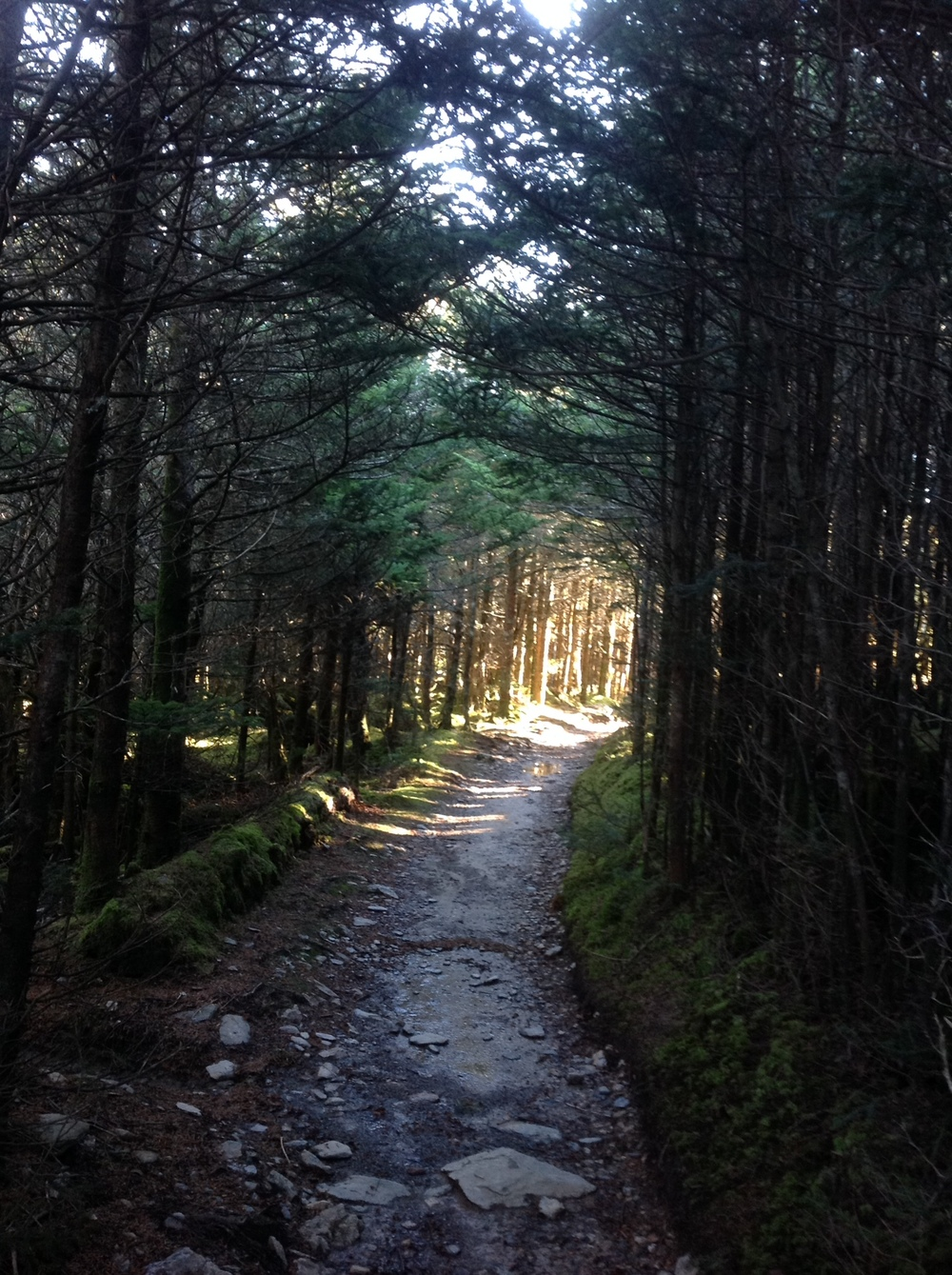 1/2 mile before the summit of Mt. Le Conte in Smoky Mountains National Park