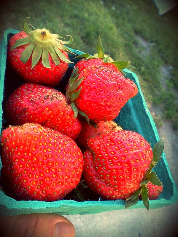 Strawberries from Seedling Farm