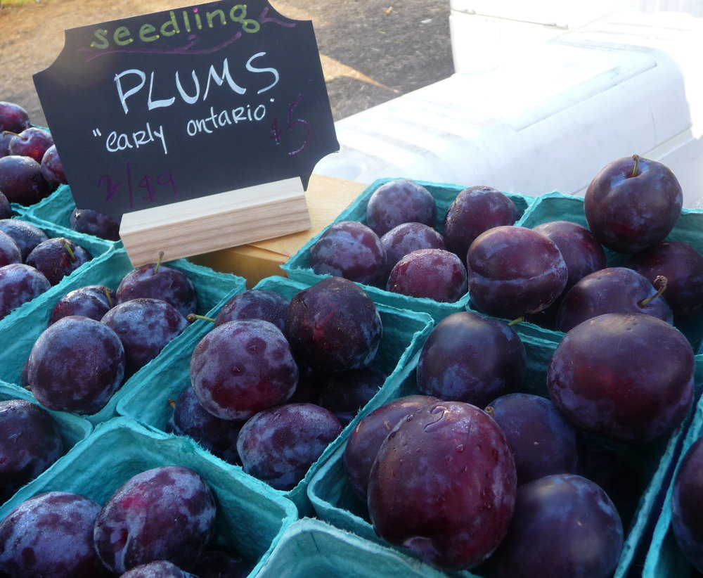 Chef's Tip - Let the Market Inspire You!  Try Purple Early Ontario Heirloom Plums in this Healthy, Plant-Based Recipe