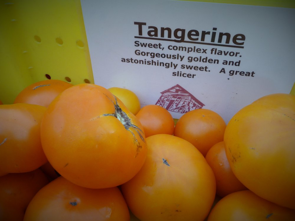 Heirloom Yellow Tangerine Tomatoes have Less Acid than Red Tomatoes, for Milder Flavor