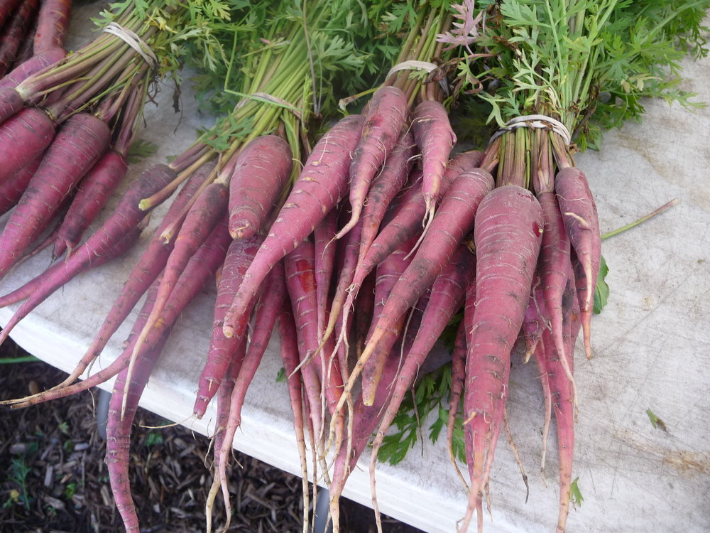 Purple Carrots have the same antioxidants as blueberries.   Add some beautiful color and nutritious flavor to your salads and side dishes