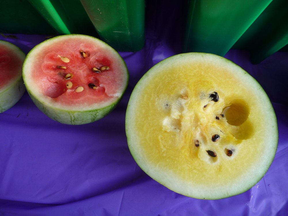 Chef's Plant-Based Tip: Galia melon is super-sweet and tastes similar to honeydew.  You can use any melon in this recipe, though.  Red and yellow watermelon, like these from Seedling Farms, can be found at most local farmer's markets in the summer