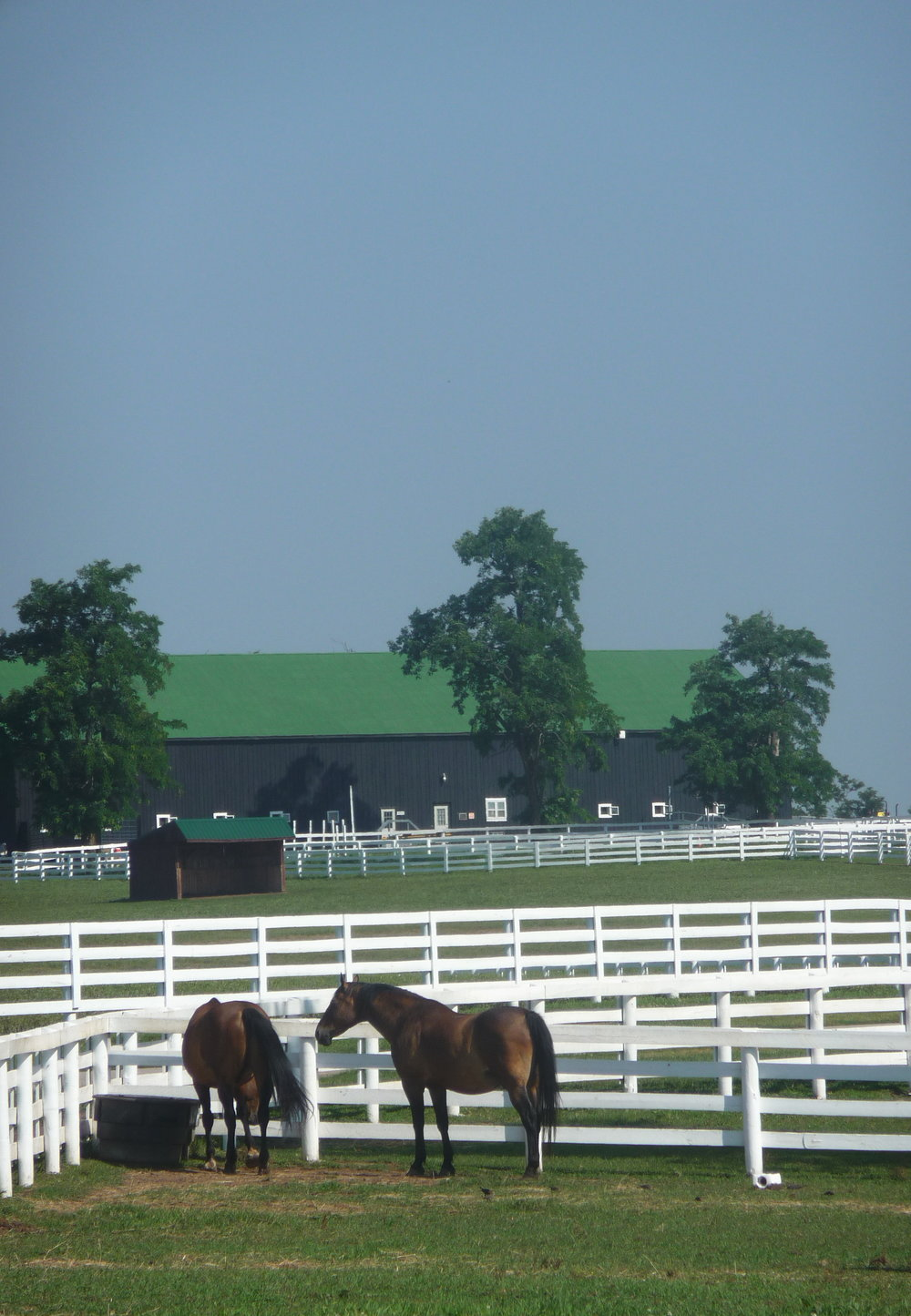 Beautiful Bluegrass of Kentucky Horse Farms