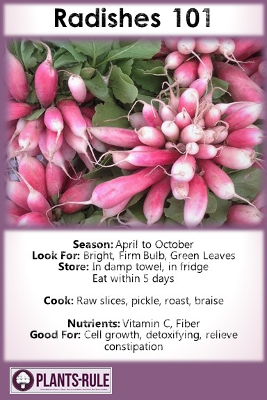 Radishes 101 - Healthy Infographic Pin for Season, How to Choose, Store, Cook, and Nutrition