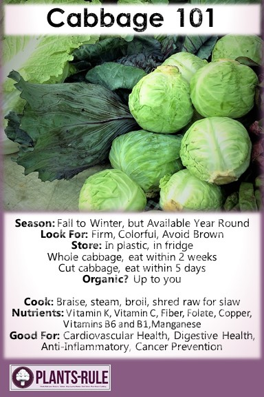 Cabbage 101 - Healthy Infographic Pin for Season, How to Choose, Store, Cook, and Nutrition