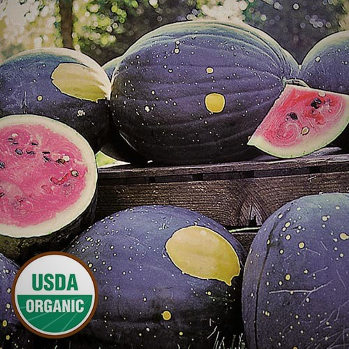 Moon and Stars Watermelon photo, courtesy of Seed Savers.   This unique melon is part of the Slow Foods Ark of Taste seed preservation movement