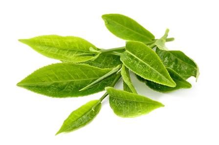 White Tea.jpg