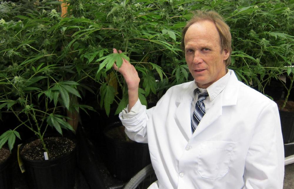 Ken Estes Granddaddy Purple Purp weed strain review