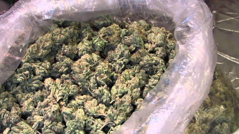Weed OG kush strain review California Landrace