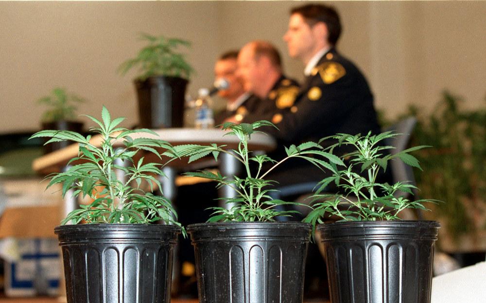 cannabis pot DEA War on drugs