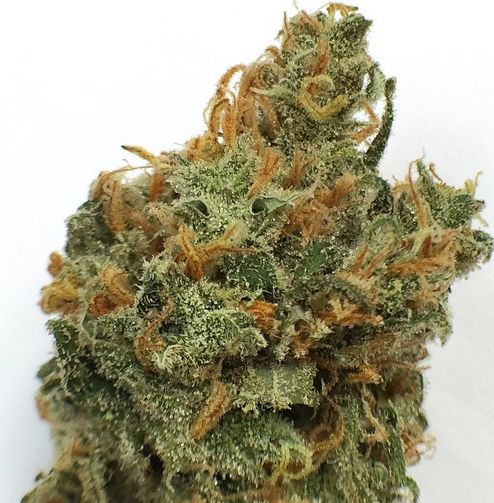 vanilla kush strain review Eazeup Eaze marijuana