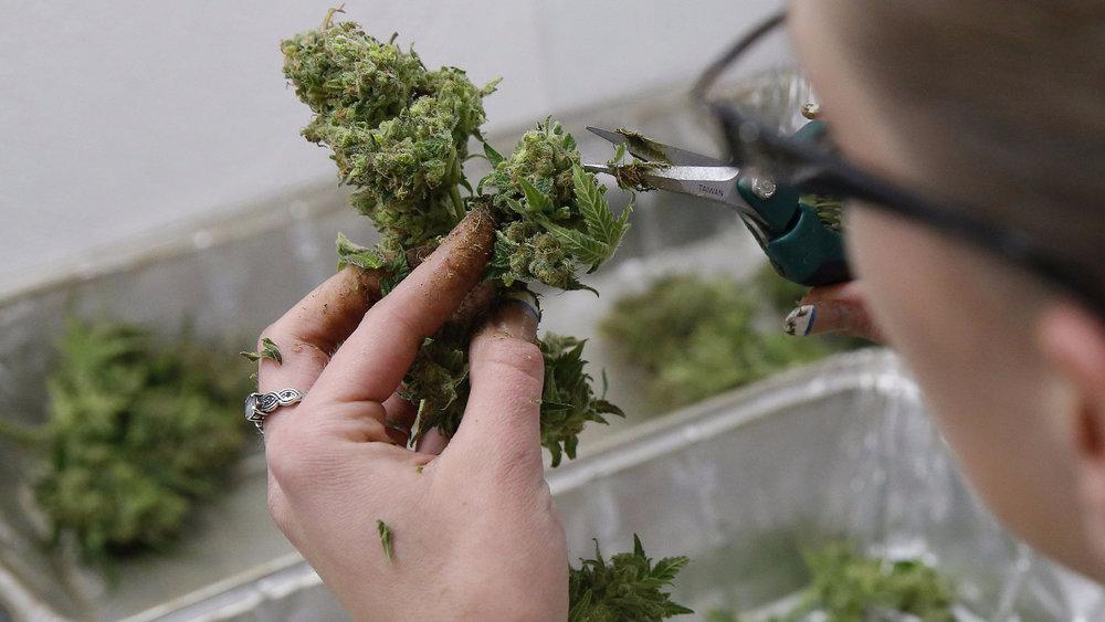 California prop 64 marijuana cannabis bud nug trimmer weed