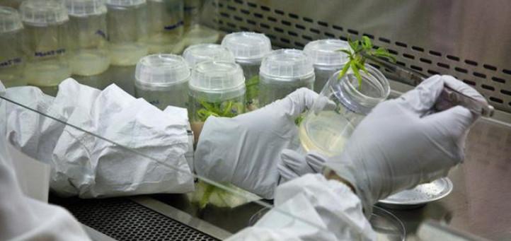 medical cannabis research H.R.2020 reschedule cannabis schedule III