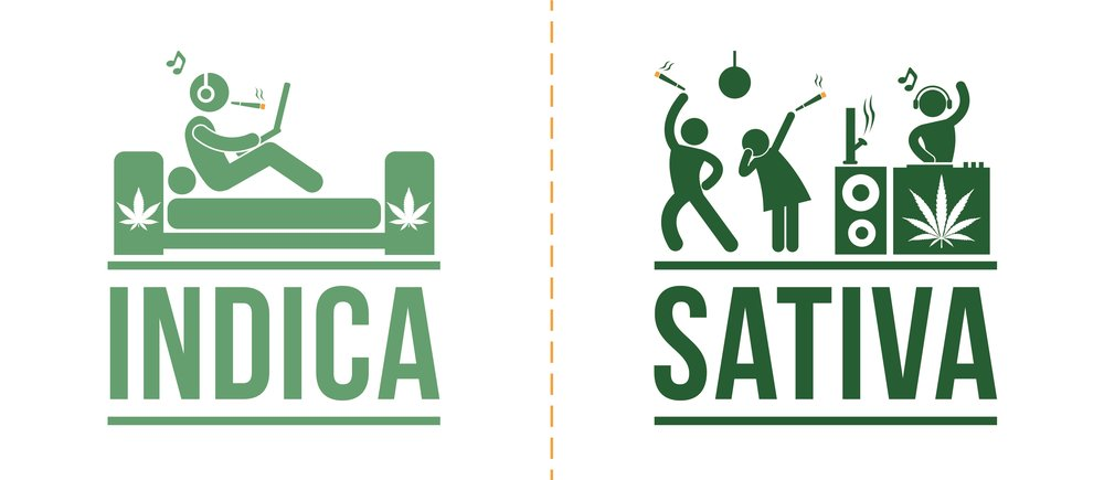 indica sativa strains difference