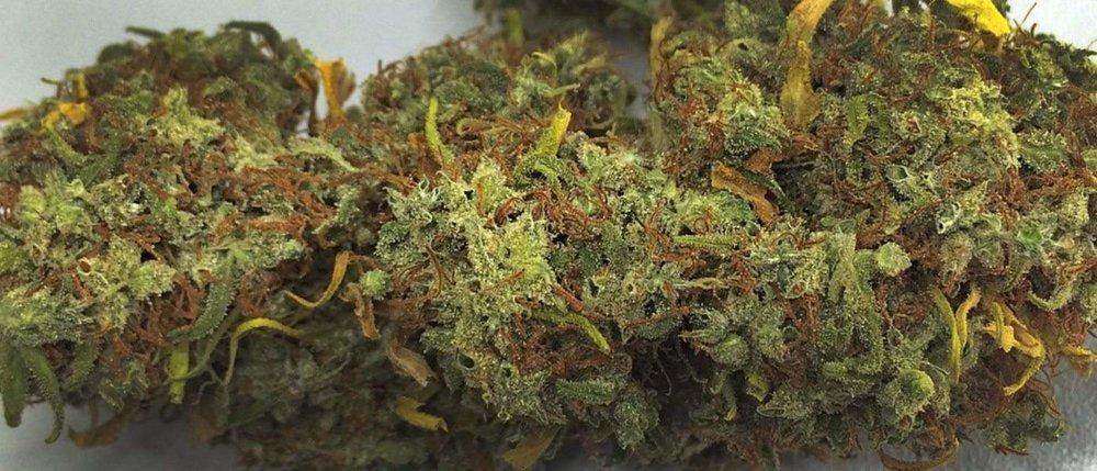 malawi gold africa cannabis strain