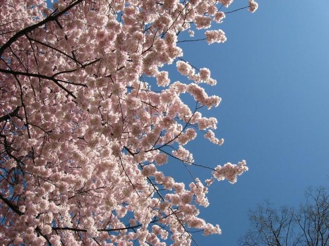 Seasonal Wellness Spring