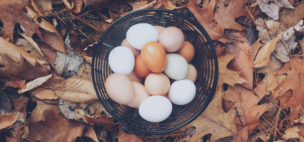 Eggs in basket article 2.png