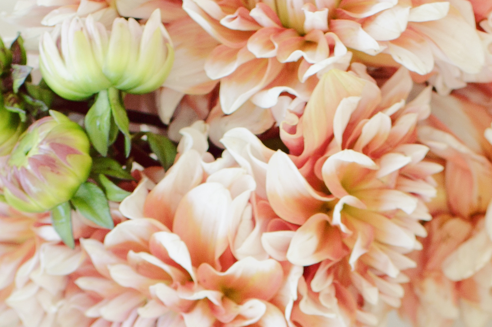 Peach dahlias brighten up the bridal bouquet.