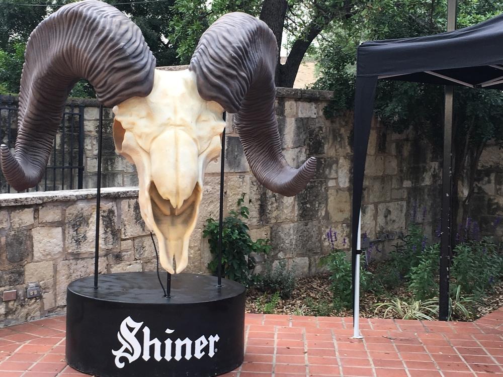 Shiner skull