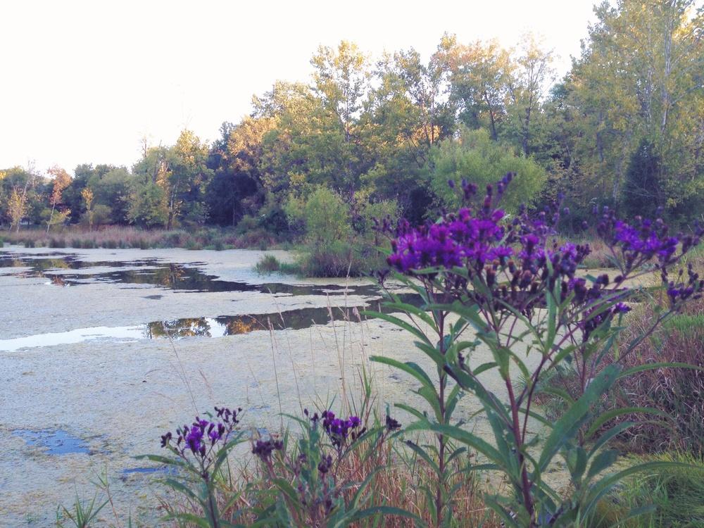 Lake Exploration, Boone Lake, Piney Flats, TN
