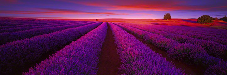 "Can you imagine how amazing it must smell in this field?  "" Splendour "", Courtesy of Peter Lik"
