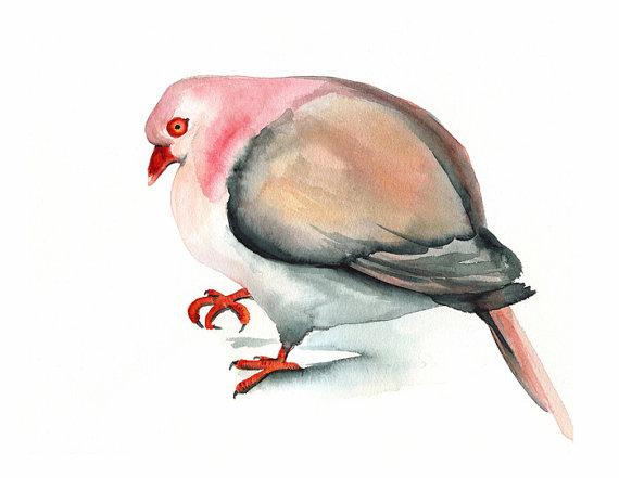 Pink Pigeon AA.jpg