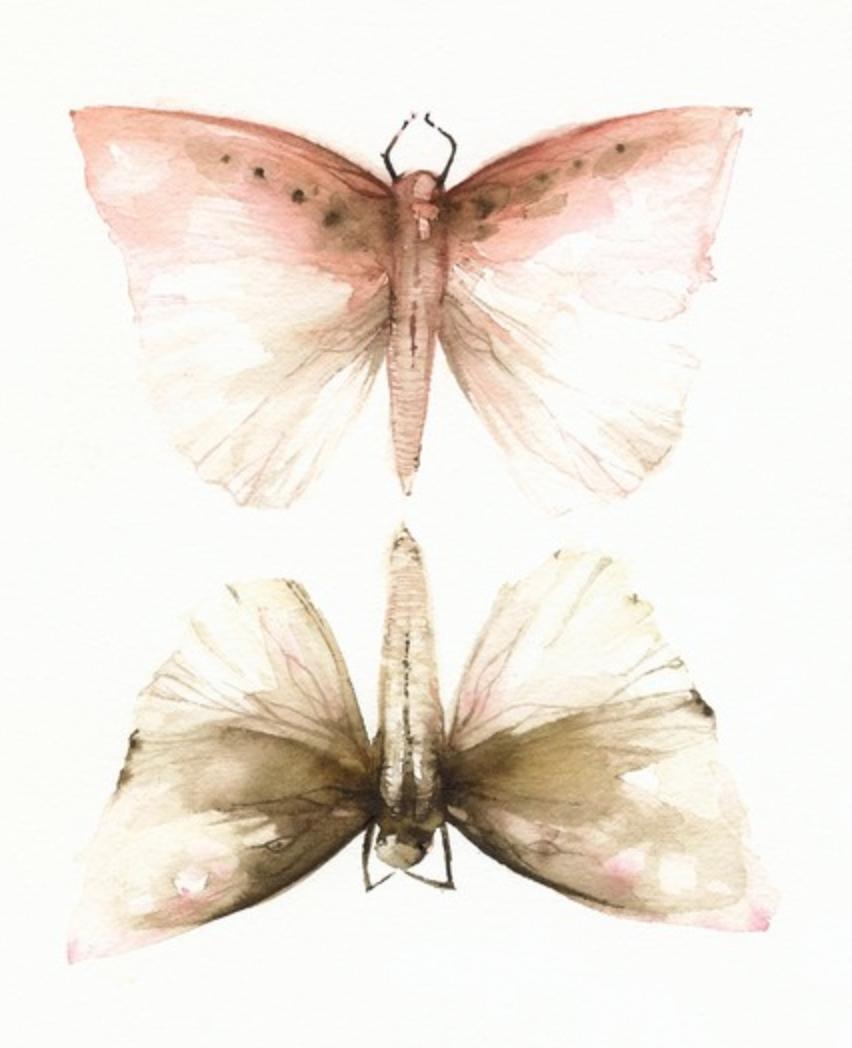 """Pink and Mocha Moths"" {Via  Etsy}"
