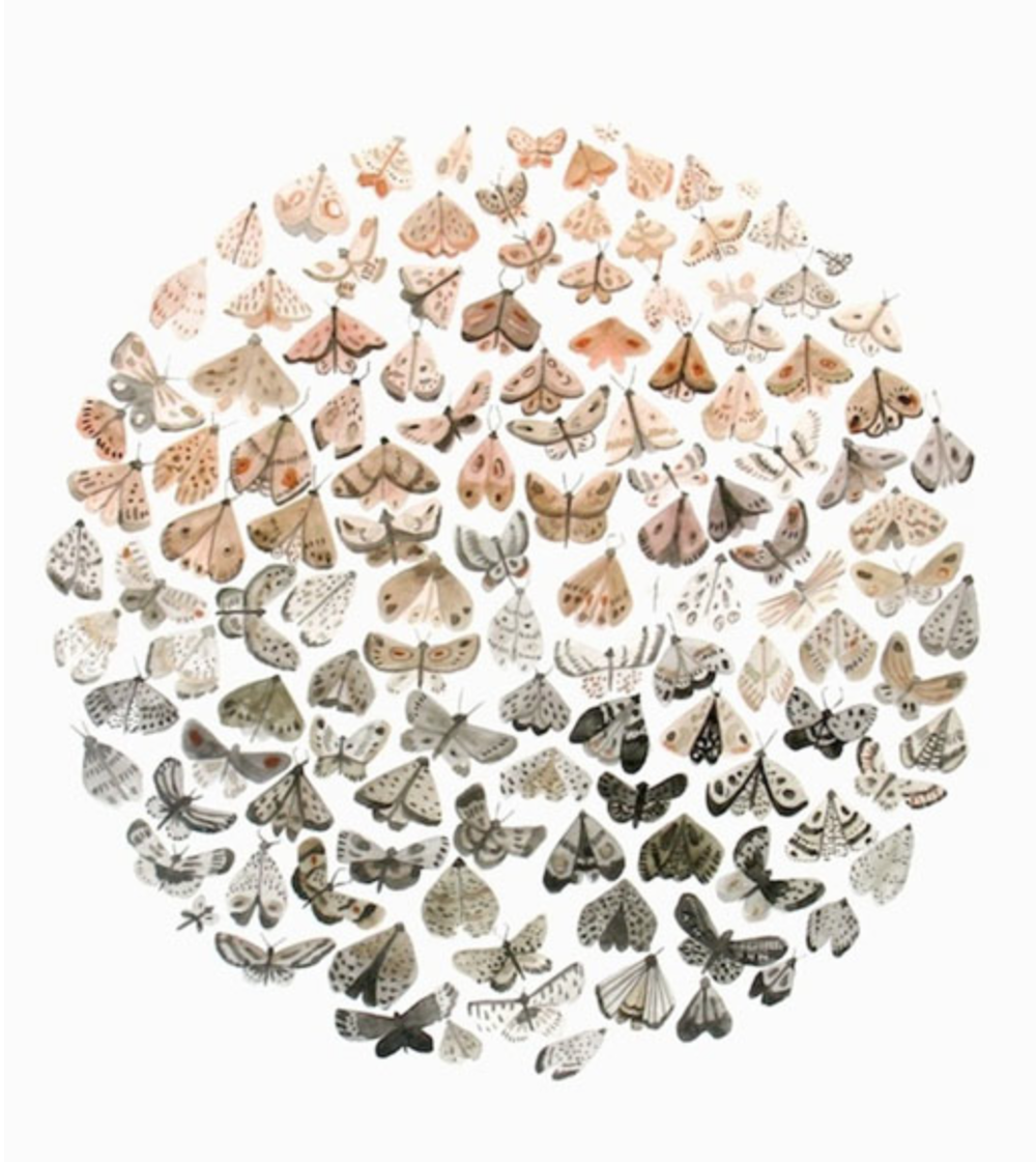 """Clusters"" {Via  Sara Burwash }"