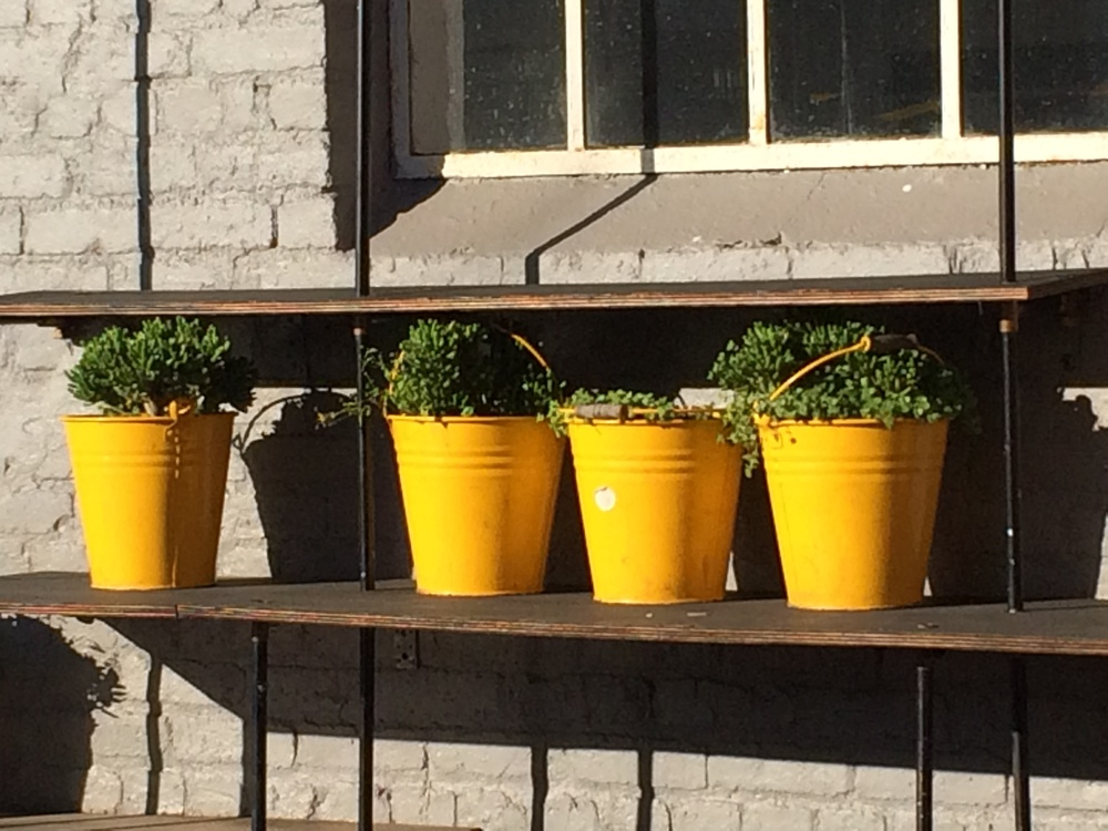 What a great idea for adding a wonderful bit of color... yellow buckets used for potting plants.