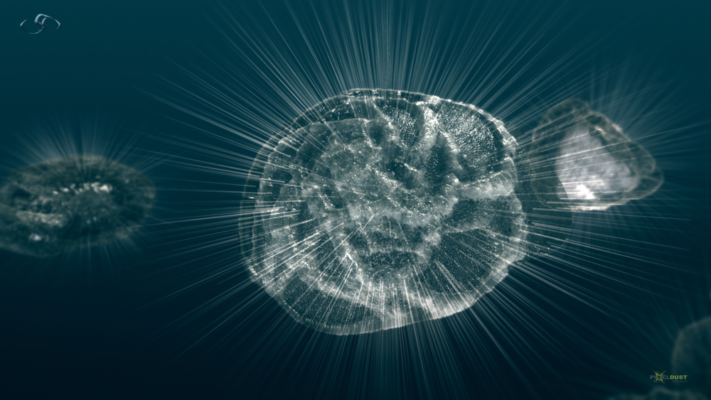 HHMI_Asteroid_SH1_Forams_FINAL_v1 (00000).jpg