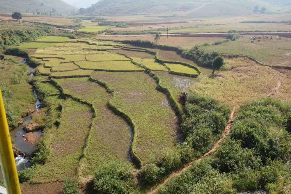 Paddy fields in Koraput, Odisha