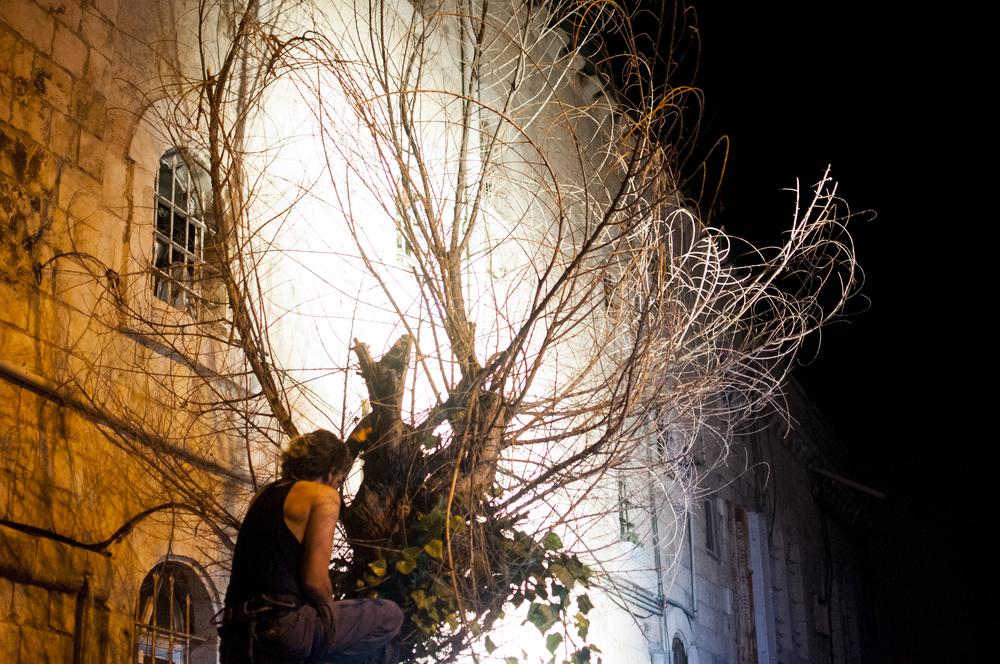 guy in the tree.jpg